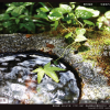 粟井温泉あしもり荘ウェブサイト